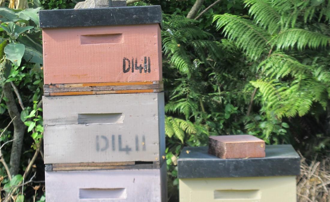 Bee lids