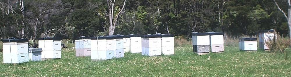 Beehives & Kanuka